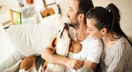 Dos and don'ts for pet owners looking for rental accommodation